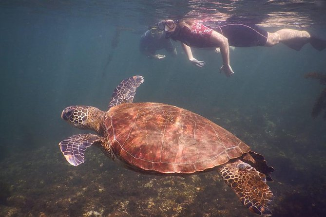 Discover this unique place in which the Marine Iguanas, Galapagos penguins, Blue-footed Boobies, Galapagos Sea Lions and marine turtles seem to adore the rocky-lava landscape. Enjoy of snorkeling in the crystal clear waters that surround the islets accompanied by a naturalist Galapagos guide. This tour will be in small groups with a maximum 16 passengers