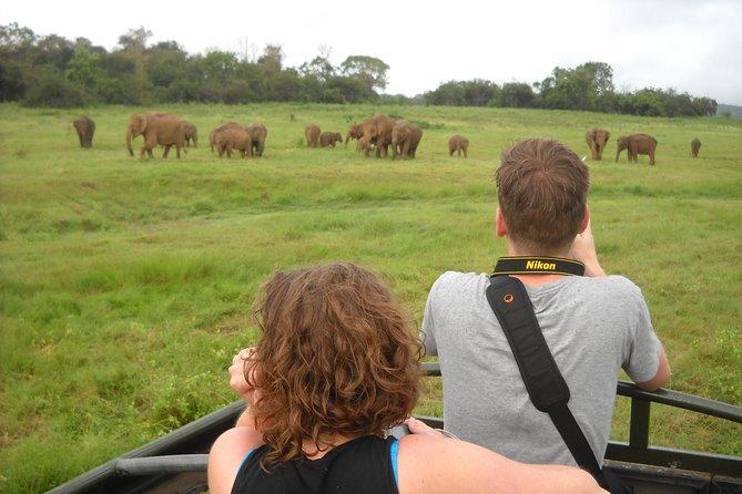 Guided Elephant Safari: See the Largest Gathering of Elephants in Asia!, Sigiriya, SRI LANKA