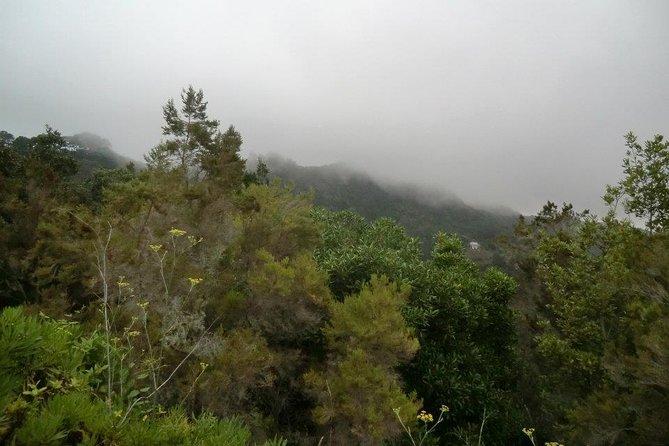 Small-group Guided Hiking Tour in Anaga Rural Park, Tenerife, ESPAÑA