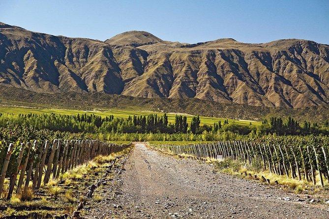 Bike por bodegas en Lujan de Cuyo - Mendoza, Mendoza, ARGENTINA