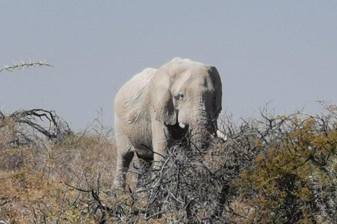 5 Day Etosha National Park Private Guided Safari Tour, Swakopmund, NAMIBIA