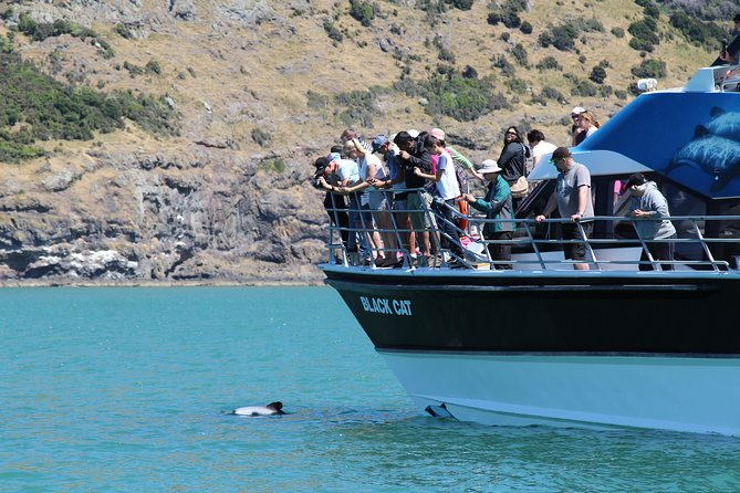 Experience majestic scenery and stunning wildlife including dolphins, penguins and marine bird life on this Akaroa Harbour Nature Cruise.