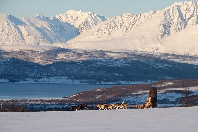 Lapland Husky Sled Safari from Tromso, Tromso, NORWAY