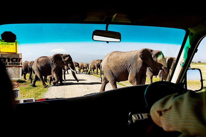 Enjoy a small-group, 2-day tour to Amboseli National Park. Your driver/guide will pick you up at your hotel around 7am and take you on safari to Amboseli which is known for larges elephant herds and for superb Mount Kilimanjaro views.