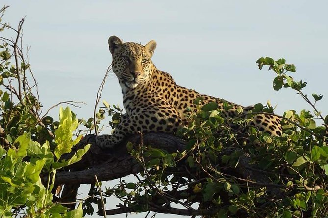 7 Days Kafue National Park, Livingstone, ZIMBABUE