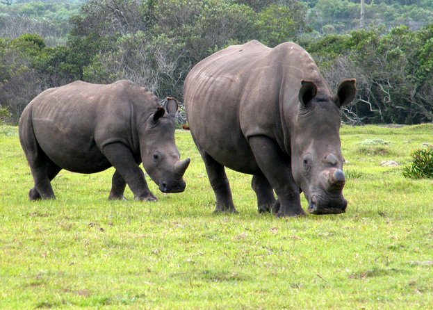 Do you have limited time in Port Elizabeth? Would you really like to experience a piece of the African Wildlife? Then this tour is for you. The Kragga Kamma Game Park is only 15 minutes from Port Elizabeth Airport and is a great way to see different animals including Rhino, Zebra, Giraffe and Buffalo in their natural environment. Guests will be picked up from their accommodation in Port Elizabeth and taken on a 2 - 3 hour guided Safari by an experienced Game Ranger. Guests will have the opportunity to take some beautiful pictures while knowledge is being shared. Afterwards guests will be dropped off back at their accommodation.<br><br>Min. of 2 Guests per tour