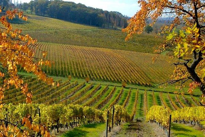 MÁS FOTOS, Private wine tour in Bergerac region by EXPLOREO