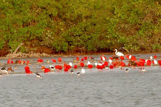 The Bigi Pan nature reserve is famous for its coastal birds: 72 species have their own fixed stay, including the red ibis, the osprey, the tern and various waders.<br>Another 50 other species visit the area as passers-by. <br>Bigi Pan is a true paradise for birdwatchers and other nature lovers.