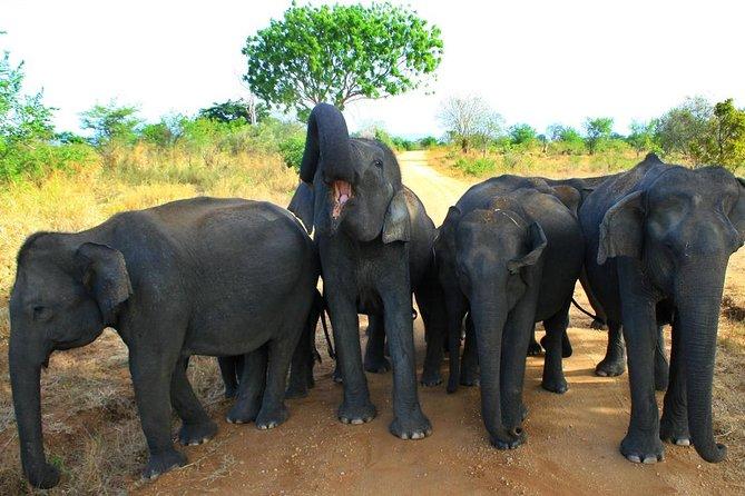 Morning Private Safari at Udawalawa National Park by La Safari inn Tours, Parque Nacional Yala, SRI LANKA