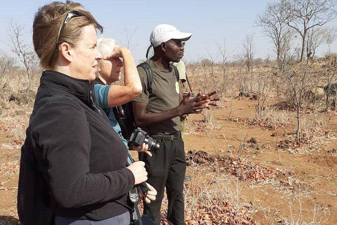 Long Rhino walk, Livingstone, ZIMBABUE