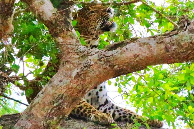 An amazing Safari Experience With Isuru at Yala National Park, Parque Nacional Yala, SRI LANKA