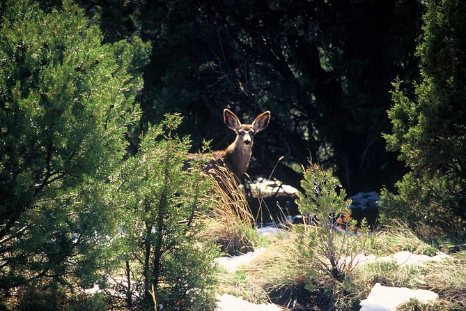 Cliff Hanger Trail, Sedona y Flagstaff, AZ, ESTADOS UNIDOS