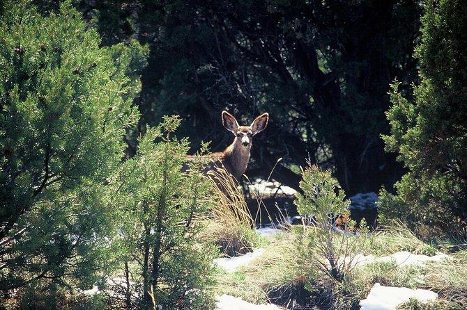 Double-the-Fun, Sedona y Flagstaff, AZ, ESTADOS UNIDOS
