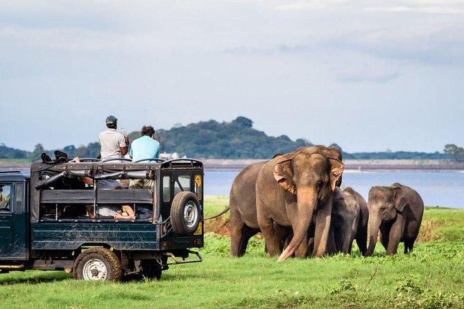 Jeep Safari to Minneriya National Park From Sigiriya., Sigiriya, SRI LANKA