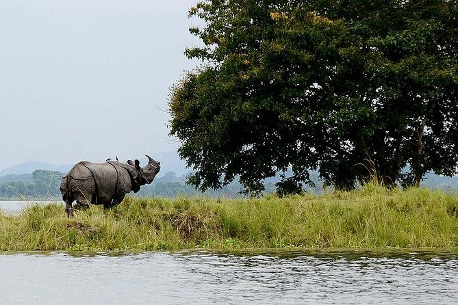A quick and most important sight visits in Guwahati and then explore Kaziranga National Park a protected area in the northeast Indian state of Assam. This tour lets you enjoy the elephant and jeep safari available in Kaziranga.This is private tour, minimum 2 pax as must for the tour. We welcome you to visit with friends and family.