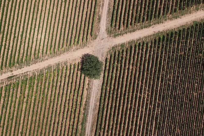 Vive una experiencia con sabor a vino, Pamplona, ESPAÑA