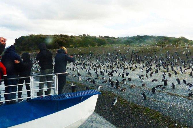 Ushuaia: Navegacion Canal Beagle hasta la Pingüinera, Ushuaia, ARGENTINA