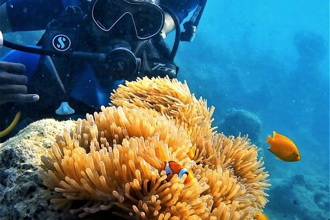 Get the best diving experience from the best dive company in Andaman taking care of all safety aspects with professional divers who accompany you underwater.