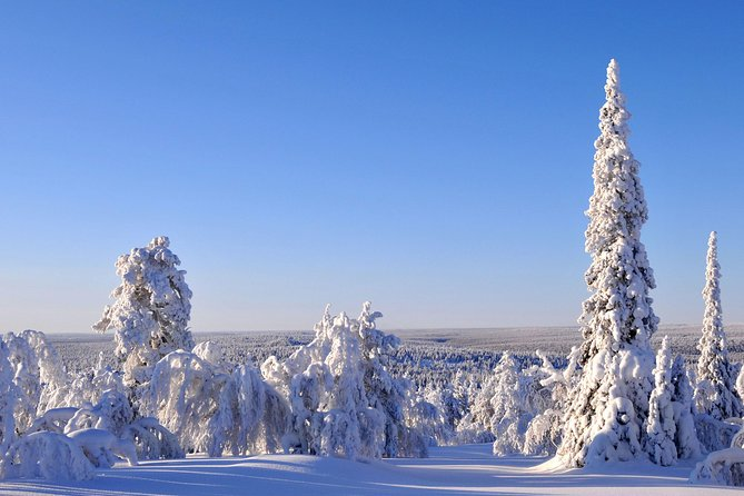 Arctic Circle and Aurora Borealis Viewing Tour from Fairbanks, Fairbanks, AK, ESTADOS UNIDOS