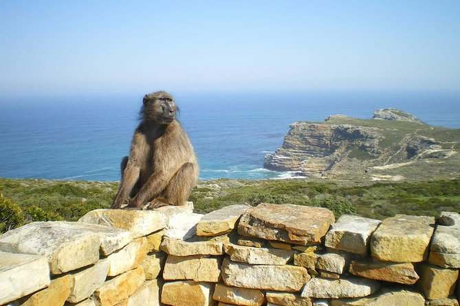 A unique opportunity to discover Cape of Good Hope and Table Mountain in one day. See the Penguin Colony on this private day tour. Take in panoramic views from Table Mountain. Skip the line to purchase Table Mountain Tickets as this tour comes with a pre-booked Table Mountain ticket for you. Skip the big buses group tours