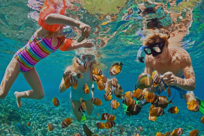 MÁS FOTOS, Dolphin Watching and Snorkeling Tour from Muscat
