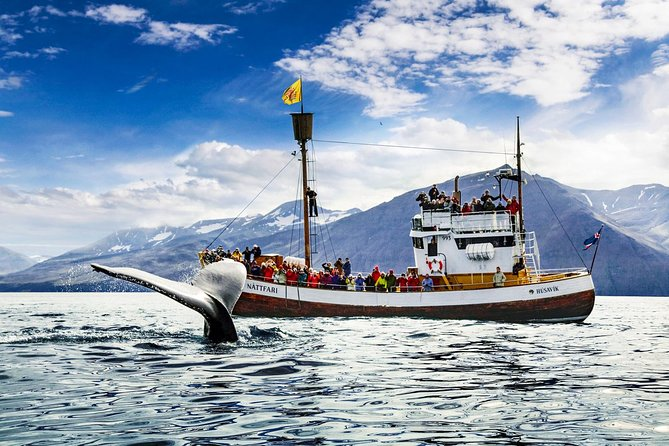 Experience the Original Húsavík Whale Watching tour that has built a reputation for the town of Húsavík as the capital of whale watching in Iceland.