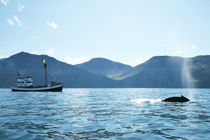 Spend approx. 3 hours at sea enjoying the wild nature on a traditional oak boat and get the best of both whales and puffins on this tour around Skjálfandi bay.