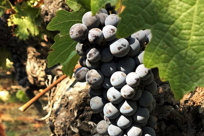 Small-Group Napa and Sonoma Wine Country Tour with Lunch, San Francisco, CA, ESTADOS UNIDOS