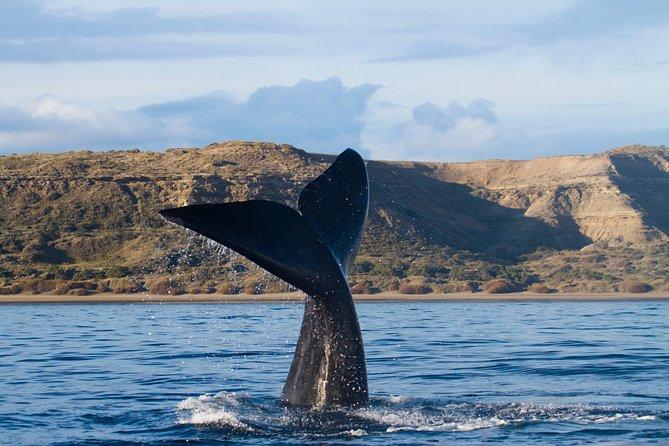 Tour de un día completo por la península Valdés desde Puerto Madryn con avistamiento de ballenas opcional, Puerto Madryn, ARGENTINA
