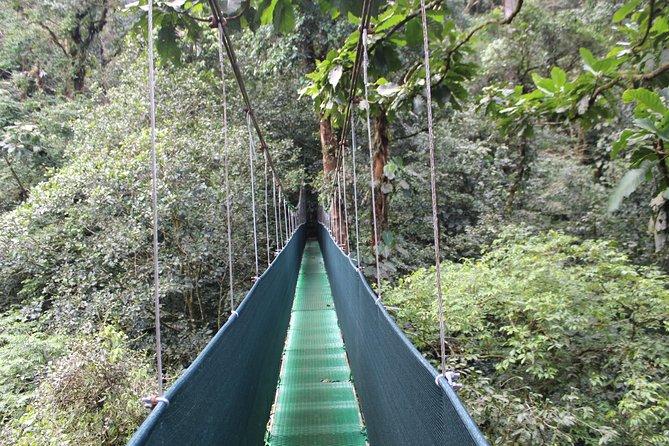 Tropical Rainforest, Hanging Bridges And Jungle Sloths Sanctuary, ,