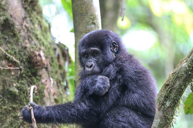 6 days Gorilla Adventure, Kampala, UGANDA