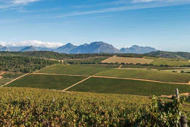 Excursão privada para amantes de vinho tinto, partindo da Cidade do Cabo, Cidade do Cabo, África do Sul