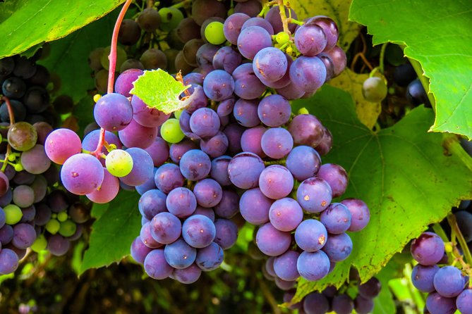 Bk Best Wine Tasting Tours Amador County 4 Hour Chevrolet Suburban Passengers 7, Sacramento, CA, ESTADOS UNIDOS