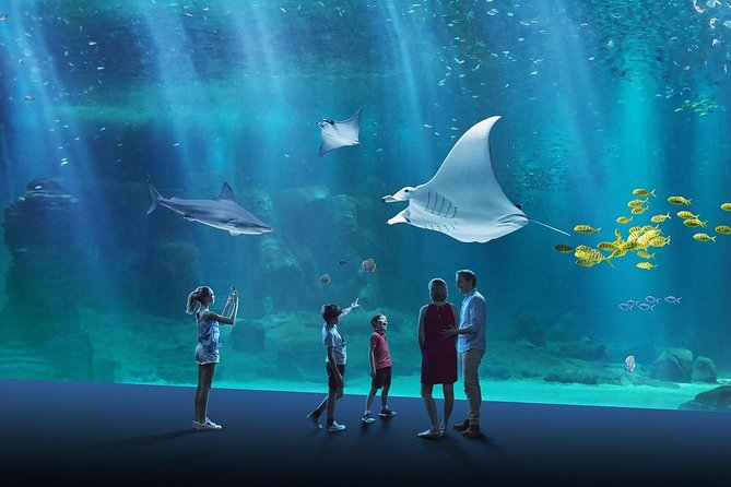Get your smart ticket (-7%) to dive into the largest aquarium in Europe.<br><br>Nausicaá, located in Boulogne-sur-Mer on the seafront, is more than just a mere aquarium: it is the largest exhibit in Europe dedicated to the discovery and protection of the marine world.<br><br>With more than 58,000 animals, Nausicaá is an incredible destination for families: marvel at the majestic pelagic rays and sharks, explore the beauties of the tropical lagoon, attend the medical training of the sea lions and many more experiences!<br><br>Pick the date of your visit and save up to 7% on each ticket compared to public price.
