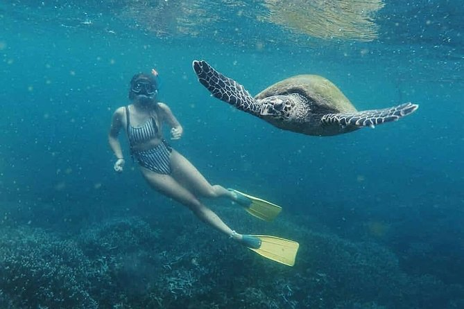 Snorkeling with Whales in Mirissa, Galle, Sri Lanka