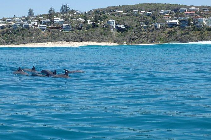 Noosa Wild Dolphin Safari, Noosa y Sunshine Coast, AUSTRALIA