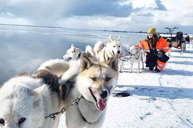 This sled/kart dog tour is a shared, family friendly, dog ride tour. Either on snow or dry land, depending on Mother Nature's generosity. With the help of your guide and musher, you will feel the power of the huskies pulling the sled or the customized cart through the fields in the South Coast of Iceland.<br><br>The tour includes a45-minutehusky ride tour, including a photo break . This is one of the first few kennels in Scandinavia with Greenlandic dogs, an opportunity you cannot miss. Small-group tour.<br><br>This tour requires you to rent a car.