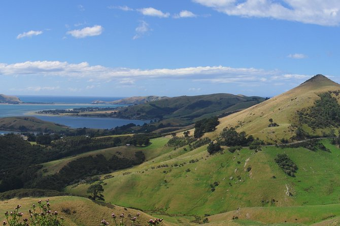 The only timetabled and public transportation to the Otago Peninsula and to Taiaroa Head. We take you to the doorstep of the various attractions