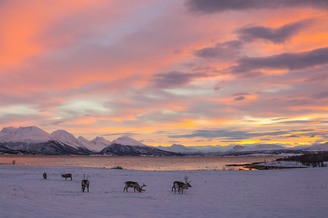 Small-Group Arctic Landscapes Sightseeing Tour from Tromso in Winter, Tromso, NORUEGA