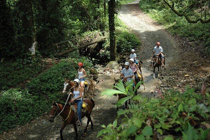 Horseback Riding Tour from Manuel Antonio, Quepos, COSTA RICA