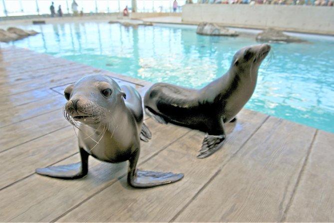 New England Aquarium Admission in Boston, Boston, MA, ESTADOS UNIDOS