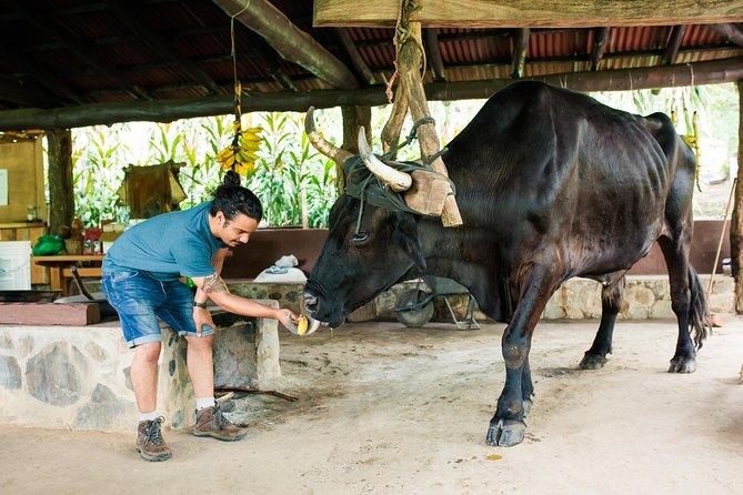 Excursión combinada de aventura en Vandara: equitación, tirolina y aguas termales, Tamarindo, COSTA RICA