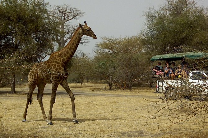 """Bandia Park reserve is one of the major attractions in Senegal for tourists staying in Dakar or nearby area. It is a conservation park that helps protect some African wildlife like giraffes, rhinos, a variety of antelopes, buffaloes, monkeys, crocodiles, tortoises and more.This tour will give youa chance to watch closely the wildlife in an eco-friendly nature. Also<br>Pink<br>Lake: Retba<br>lakeis amazing marvel of nature, know througout the world as<br>Pink<br>lake.It""""s a famous for its remarquable pinkish-coloured water (due to unique bacteria and its strong salt content) that can turn to purple depending on the intensity of sunlight"""