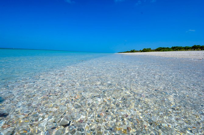 Eco Shelling Cruise to Keewaydin Island, Naples, FL ...