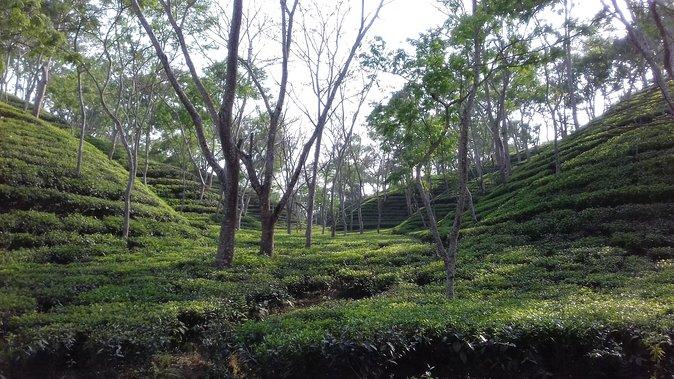 MÁS FOTOS, 4 days Dhaka to Sylhet & Srimangal
