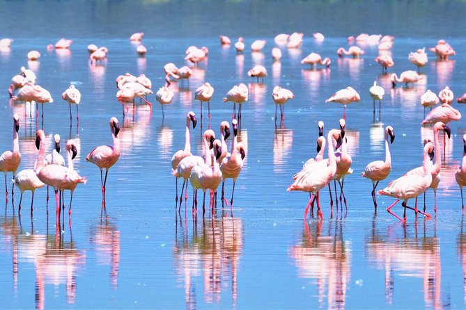 Scenic Lake Nakuru is Kenya's most popular national park. It offers good wildlife viewing with four of the Big Five present.<br>The small park doesn't support elephants but Rhinos are particularly easy to see.<br>It's also famous for big flocks of flamingos.