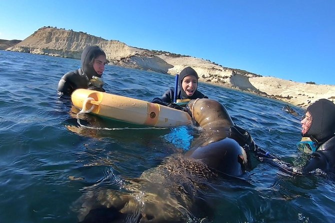 This is the main experience of Puerto Madryn, you will have the posibility to play with these awesome animals in their natural habitat. The best part about this experience is that the interaction is natural. The animals are not trained, nor fed by us, interaction is all about their curiosity (100% wild life) <br><br>The amazing thing is that as we are with them since they born, they are used to us and are really friendly. And this is what makes it a very unique and unforgettable experience<br><br>Remember contact us the day before, to confirm weather and strart time of the excursion!<br>