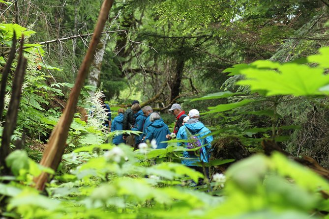 Hike over the rolling terrain and through the temperate rainforest of Chilkat Lake State Park in Haines, Alaska! In our 5 hour adventure, we will be able to enjoy magnificent glacier views from across the fjord as we hike through temperate rainforest and beach-side meadows, known as Moose Meadows. As we make our way out on to the easily-accessed yet remote beach, we will enjoy a fresh picnic-style lunch before returning to the trailhead.