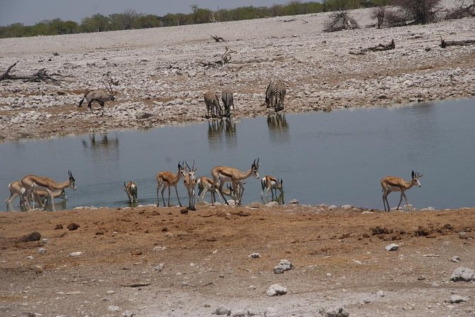 This tour is perfect for safari lovers who seek to enjoy a superb safari, vast, scenic landscape and a close encounter with untouched nature. Explore Etosha and get a chance to have a unique African adventure at its best.