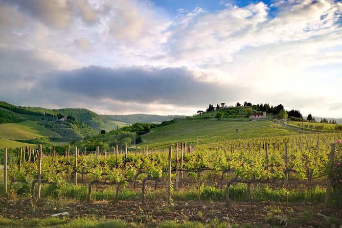 Private Wine Tours VIP TOURS, Siena, ITALY